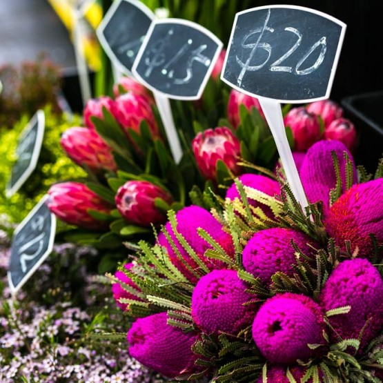 Clara's Flowers Blooms