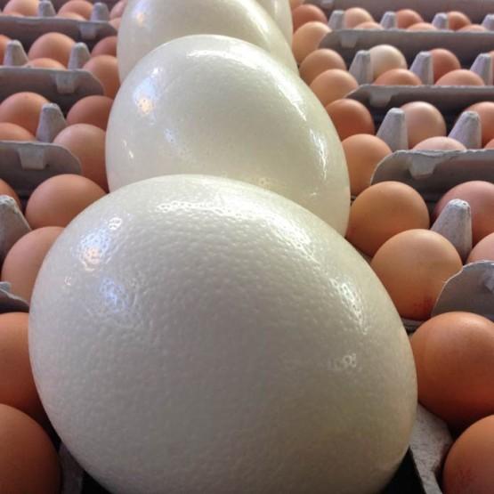 Prahran Eggs Plus Ostrich