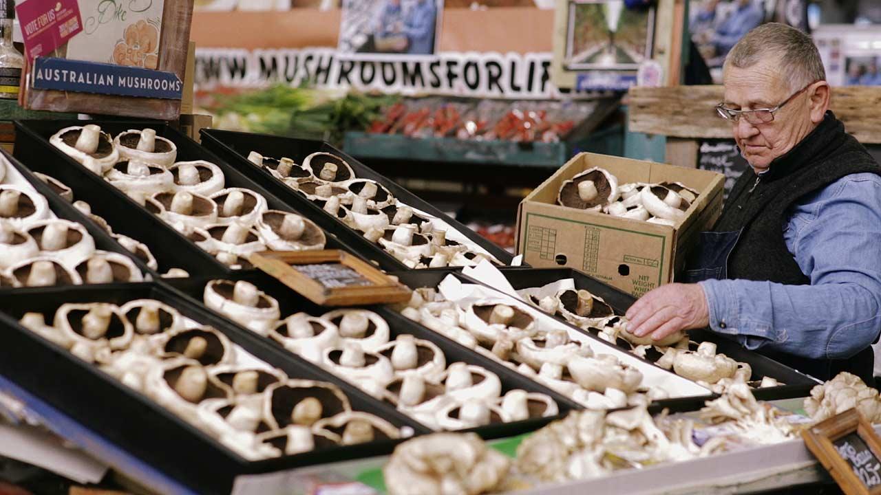 Mushrooms2_still