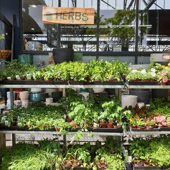 herbs on pots
