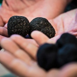 Alice in Frames local black Truffle Season and black truffle