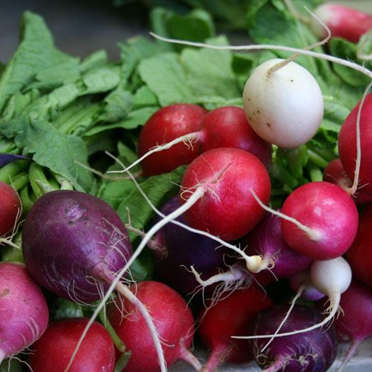 February Vegetables