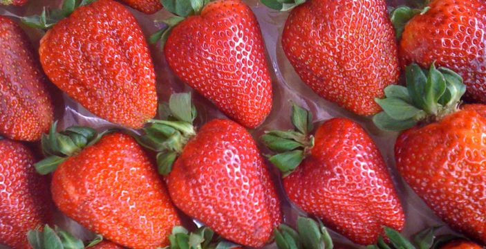 Organic Strawberries with Tobie Puttock