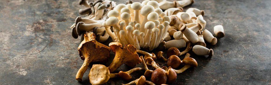 Special Day Gourmet Mushroom Guide