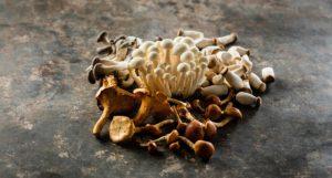Special-Mushrooms