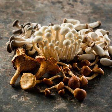 Special Day Gourmet Mushrooms