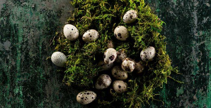Gourmet egg recipes