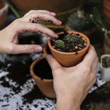 Spring-gardening-tips