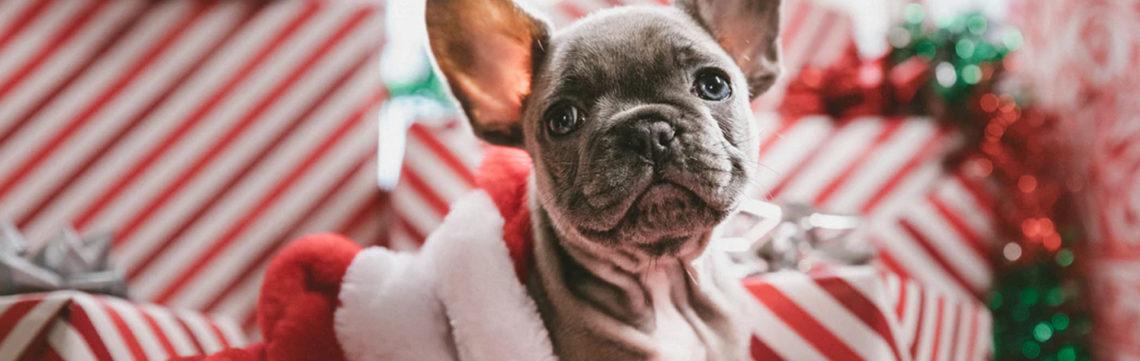 Pets with santa photos