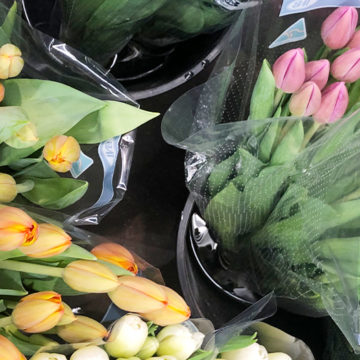 Transitional Flowers - Tulips