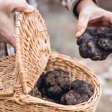 Oakhill truffles